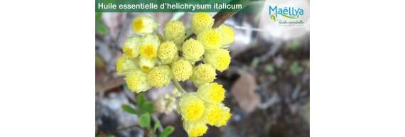 Huile essentielle Helichrysum italicum