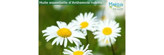 Huile essentielle d'Anthemnis Nobilis